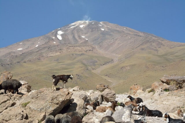 Goats and Sheeps in Goosfandsara (3000m), Damavand South BC