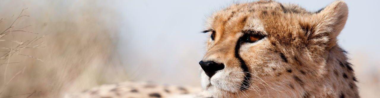 iranian persian cheetah adventures iran tour 2 trekking tour package damavand