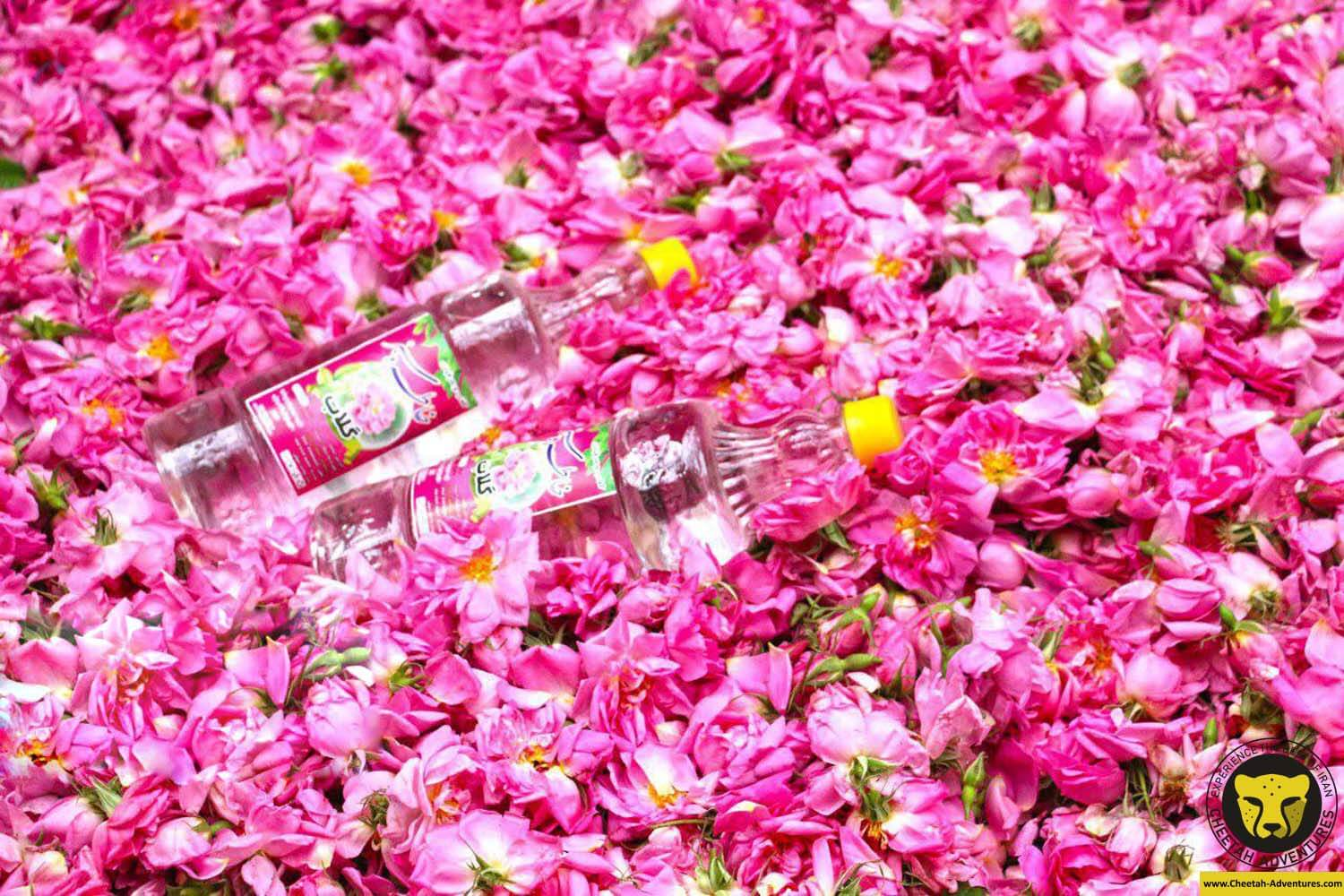 golab giri kashan rose water souvenir iran tour package