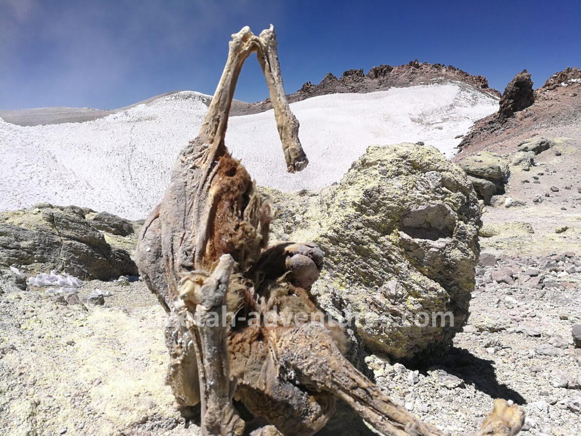 Mount Damavand summit several frozen sheep carcasses resembling mummies frozen animals wonders trekking climb damavand tour