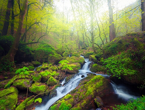 Hyrcanian Forests, North of Iran destinations things to do in iran attractions Caspian_Forests