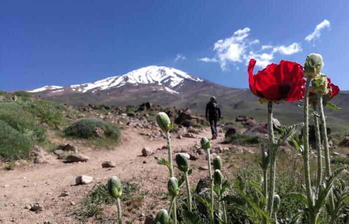 Mount Damavand mountain tour Damavand facts information Puppies in June, around Goosfandsara basecamp (3000m)