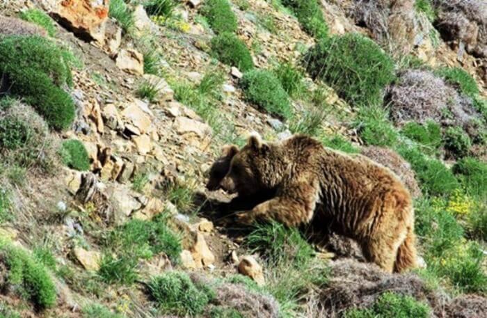 Wildlife ardabil mount sabalan mountain trekking tour iran travel guide attractions things to do destinations Cheetah adventures
