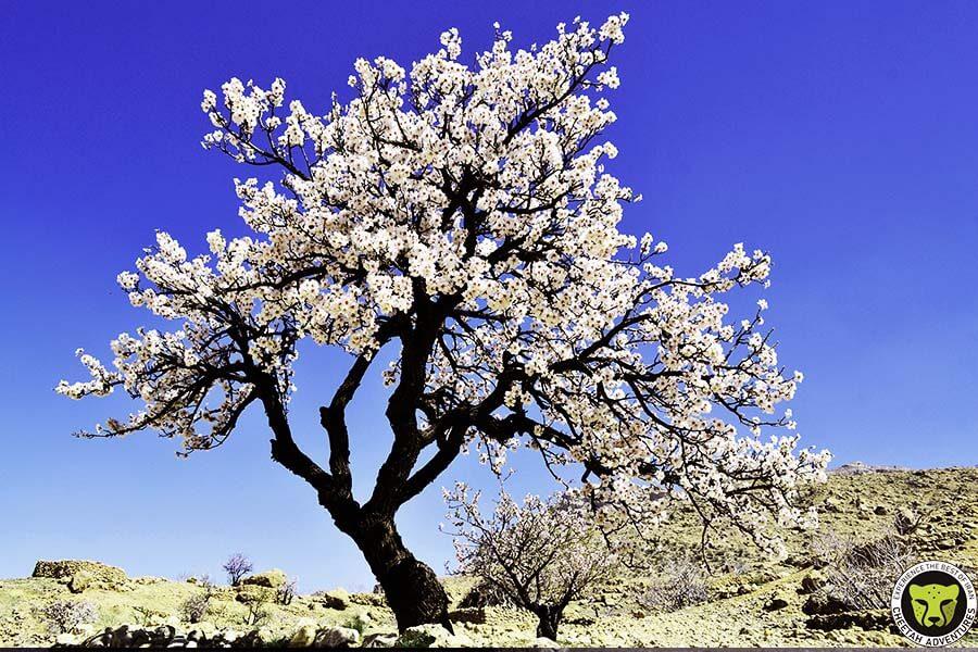Nowruz_Cheetah_Adventure_Iran_Spring_season